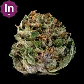 Purple Wookies