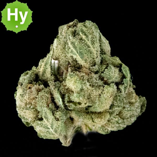 Native herb glue