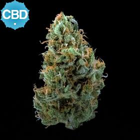 CBD Super Gurl