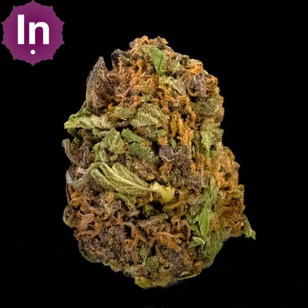 Blacksmith purple hindu kush