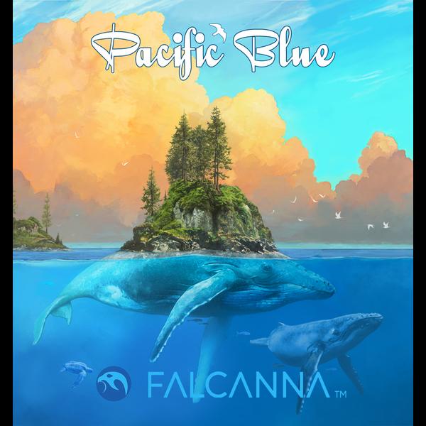 Falcanna pacific blue 2