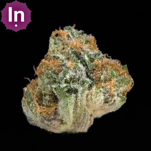 Artizen purple pumnch